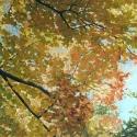2_Autumn Branches_OlenaLopatina
