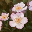 3_Blossoms_Olena-Lopatina